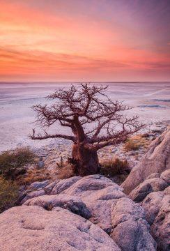 01-Nature-Lekubu Island-in-Botswana-Photo-Safari-20110729_3016